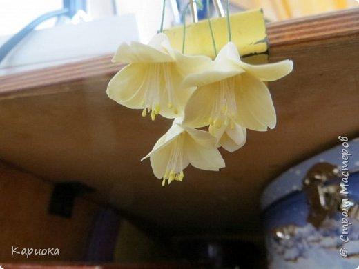 Здравствуйте жители СМ!  Недавно лепила жасмин из хф - и просто влюбилась в этот цветок! Вот что получилось. Решила сфоткать процесс создания цветочка - вдруг кому-то пригодится. фото 18