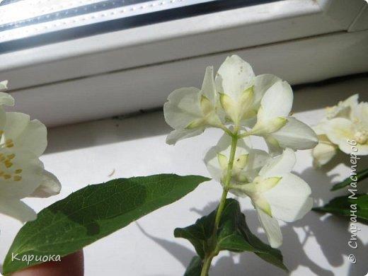 Здравствуйте жители СМ!  Недавно лепила жасмин из хф - и просто влюбилась в этот цветок! Вот что получилось. Решила сфоткать процесс создания цветочка - вдруг кому-то пригодится. фото 29