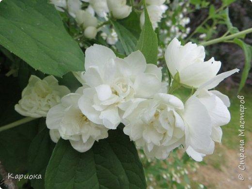 Здравствуйте жители СМ!  Недавно лепила жасмин из хф - и просто влюбилась в этот цветок! Вот что получилось. Решила сфоткать процесс создания цветочка - вдруг кому-то пригодится. фото 31