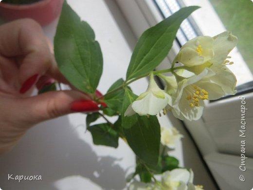 Здравствуйте жители СМ!  Недавно лепила жасмин из хф - и просто влюбилась в этот цветок! Вот что получилось. Решила сфоткать процесс создания цветочка - вдруг кому-то пригодится. фото 30