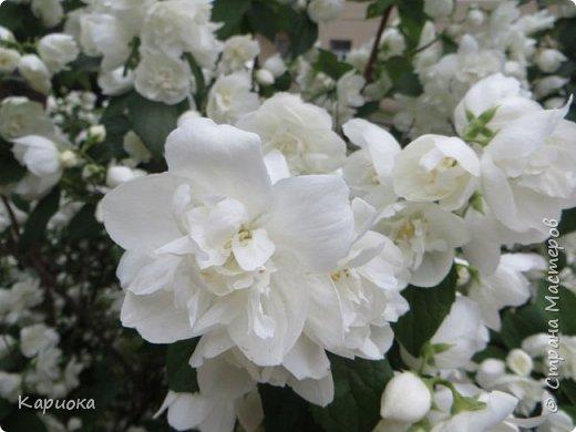Здравствуйте жители СМ!  Недавно лепила жасмин из хф - и просто влюбилась в этот цветок! Вот что получилось. Решила сфоткать процесс создания цветочка - вдруг кому-то пригодится. фото 33