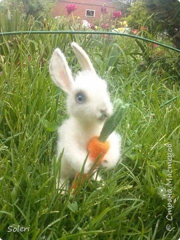 Зайка с морковкой фото 1