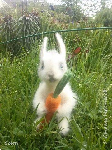 Зайка с морковкой фото 4