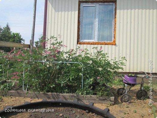 Вот такая красавица охраняет клубнику. фото 8