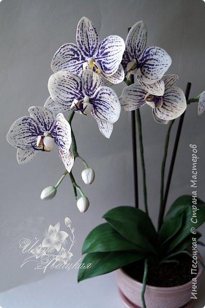 """Вот такая орхидейка """"зацвела"""" у меня на этот раз))) Пятнистый фаленопсис. Все из фоамирана и сопутствующих ему материалов. фото 1"""