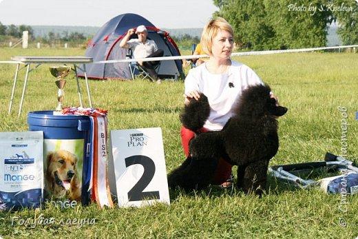 Русский черный терьер Блек Росси Лаурель - BIS-1 (Лучшая собака выставки)! Черный терьер - гордость российской кинологии. Порода завоевала мир. фото 2
