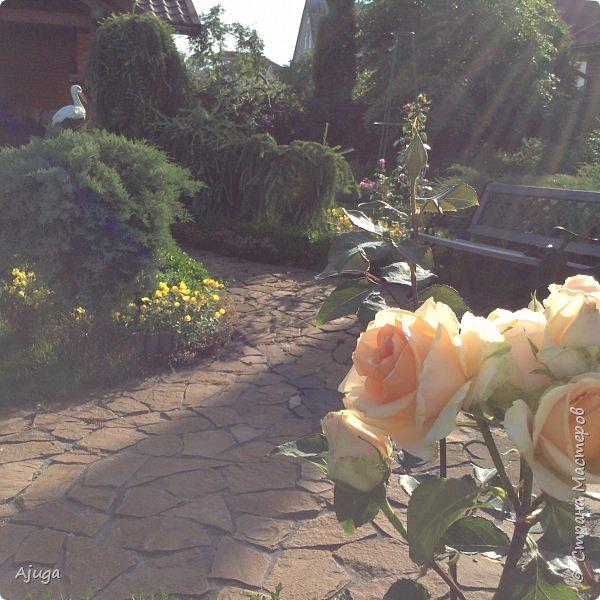 Начали цветение  лилии. фото 21