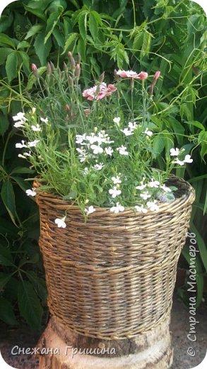 Здравствуйте дорогие жители Страны Мастеров! Лето и дачный сезон в разгаре!!! Я все пристраиваю свои цветочки в плетеные корзинки!! фото 2