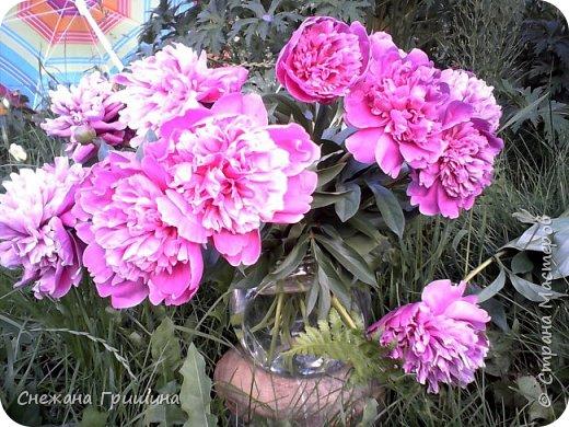 Здравствуйте дорогие жители Страны Мастеров! Лето и дачный сезон в разгаре!!! Я все пристраиваю свои цветочки в плетеные корзинки!! фото 9