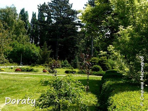 Всех приветствую! У нас Алисой отпуск, мы отдыхаем и набираемся новых впечатлений.Хотелось бы и с вами мои дорогие поделиться хорошим настроением. Я приглашаю на прогулку в ботанический сад  БФУ  им. Канта. Берите с собой бутерброды термос с чаем . Путешествие начинается .       Ботанический сад БФУ им.И.Канта располагается на территории бывшего Кёнигсбергского городского садоводства (1904-1945 гг., площадь – 12,5 га), открывшегося в одном из красивейших пригородов Maraunenhof (Марауненхоф, позже стал районом Кёнигсберга). Садоводство создавалось по решению Городского управления Кёнигсберга, с целью практического обучения ботанике учащихся школ и садоводству - для любителей и профессионалов, а также как база озеленения столицы Восточной Пруссии, её пригородов. Основатель и первый директор Садоводства Пауль Кэбер (Paul Käber) был профессором, заведующим кафедрой высших растений и систематики Альбертины (Кёнигсбергский университет).     К 1938 году богатый коллекционный фонд оранжерейных растений насчитывал около 4 тыс. таксонов. Однако в конце Второй мировой войны оранжереи были разрушены (сохранились только каркасы), а немецкие коллекции полностью утрачены. Оранжерейные растения (около 4 тыс. наименований) и цветы открытого грунта погибли. Сохранились только древесно-кустарниковые растения. По инвентаризации 1958 года их насчитывалось всего около 400 наименований.    В 1948 г. началась планомерная работа по возрождению коллекции и благоустройству сада. Были построены теплицы, восстановлены оранжереи, очищен пруд, обновлена планировка. Формирование новой коллекции теплолюбивых видов и форм началось после реконструкции старых оранжерей и пристройки теплицы.   фото 2