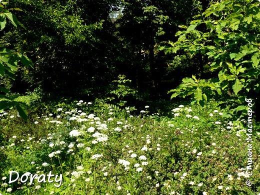 Всех приветствую! У нас Алисой отпуск, мы отдыхаем и набираемся новых впечатлений.Хотелось бы и с вами мои дорогие поделиться хорошим настроением. Я приглашаю на прогулку в ботанический сад  БФУ  им. Канта. Берите с собой бутерброды термос с чаем . Путешествие начинается .       Ботанический сад БФУ им.И.Канта располагается на территории бывшего Кёнигсбергского городского садоводства (1904-1945 гг., площадь – 12,5 га), открывшегося в одном из красивейших пригородов Maraunenhof (Марауненхоф, позже стал районом Кёнигсберга). Садоводство создавалось по решению Городского управления Кёнигсберга, с целью практического обучения ботанике учащихся школ и садоводству - для любителей и профессионалов, а также как база озеленения столицы Восточной Пруссии, её пригородов. Основатель и первый директор Садоводства Пауль Кэбер (Paul Käber) был профессором, заведующим кафедрой высших растений и систематики Альбертины (Кёнигсбергский университет).     К 1938 году богатый коллекционный фонд оранжерейных растений насчитывал около 4 тыс. таксонов. Однако в конце Второй мировой войны оранжереи были разрушены (сохранились только каркасы), а немецкие коллекции полностью утрачены. Оранжерейные растения (около 4 тыс. наименований) и цветы открытого грунта погибли. Сохранились только древесно-кустарниковые растения. По инвентаризации 1958 года их насчитывалось всего около 400 наименований.    В 1948 г. началась планомерная работа по возрождению коллекции и благоустройству сада. Были построены теплицы, восстановлены оранжереи, очищен пруд, обновлена планировка. Формирование новой коллекции теплолюбивых видов и форм началось после реконструкции старых оранжерей и пристройки теплицы.   фото 3
