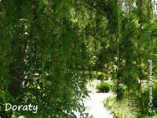 Всех приветствую! У нас Алисой отпуск, мы отдыхаем и набираемся новых впечатлений.Хотелось бы и с вами мои дорогие поделиться хорошим настроением. Я приглашаю на прогулку в ботанический сад  БФУ  им. Канта. Берите с собой бутерброды термос с чаем . Путешествие начинается .       Ботанический сад БФУ им.И.Канта располагается на территории бывшего Кёнигсбергского городского садоводства (1904-1945 гг., площадь – 12,5 га), открывшегося в одном из красивейших пригородов Maraunenhof (Марауненхоф, позже стал районом Кёнигсберга). Садоводство создавалось по решению Городского управления Кёнигсберга, с целью практического обучения ботанике учащихся школ и садоводству - для любителей и профессионалов, а также как база озеленения столицы Восточной Пруссии, её пригородов. Основатель и первый директор Садоводства Пауль Кэбер (Paul Käber) был профессором, заведующим кафедрой высших растений и систематики Альбертины (Кёнигсбергский университет).     К 1938 году богатый коллекционный фонд оранжерейных растений насчитывал около 4 тыс. таксонов. Однако в конце Второй мировой войны оранжереи были разрушены (сохранились только каркасы), а немецкие коллекции полностью утрачены. Оранжерейные растения (около 4 тыс. наименований) и цветы открытого грунта погибли. Сохранились только древесно-кустарниковые растения. По инвентаризации 1958 года их насчитывалось всего около 400 наименований.    В 1948 г. началась планомерная работа по возрождению коллекции и благоустройству сада. Были построены теплицы, восстановлены оранжереи, очищен пруд, обновлена планировка. Формирование новой коллекции теплолюбивых видов и форм началось после реконструкции старых оранжерей и пристройки теплицы.   фото 9