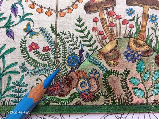 Таинственный сад. Раскрасила самую первую иллюстрацию, которая идет сразу после обложки)) (совершенно не помню как называется этот разворот...) фото 15