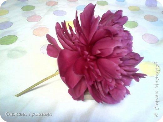Здравствуйте дорогие жители Страны Мастеров!!! Сегодня я разобрала пион ,может кому то будет интересно и послужит наглядным примером для создания цветов из фоамирана и холодного фарфора или п/глины.... фото 1