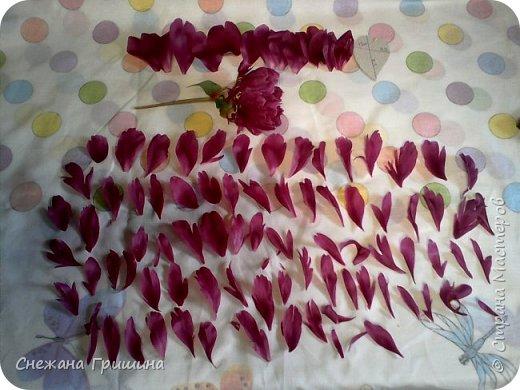 Здравствуйте дорогие жители Страны Мастеров!!! Сегодня я разобрала пион ,может кому то будет интересно и послужит наглядным примером для создания цветов из фоамирана и холодного фарфора или п/глины.... фото 5