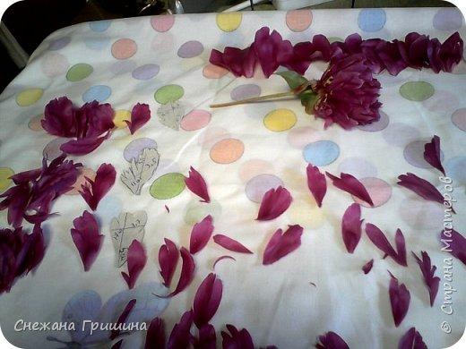 Здравствуйте дорогие жители Страны Мастеров!!! Сегодня я разобрала пион ,может кому то будет интересно и послужит наглядным примером для создания цветов из фоамирана и холодного фарфора или п/глины.... фото 6