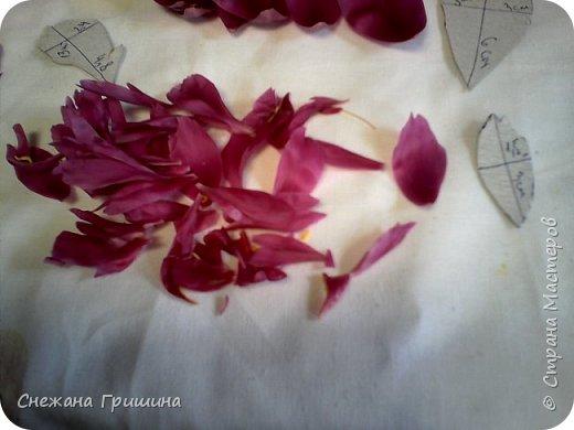 Здравствуйте дорогие жители Страны Мастеров!!! Сегодня я разобрала пион ,может кому то будет интересно и послужит наглядным примером для создания цветов из фоамирана и холодного фарфора или п/глины.... фото 19