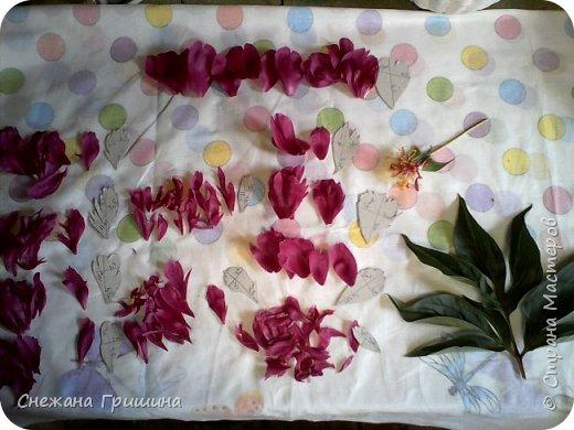 Здравствуйте дорогие жители Страны Мастеров!!! Сегодня я разобрала пион ,может кому то будет интересно и послужит наглядным примером для создания цветов из фоамирана и холодного фарфора или п/глины.... фото 22