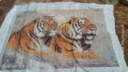 Полгода вышивала я тигров. Пока это самая большая картина, которую я вышила (35х52). Решила немного показать процесс да и для себя оставить память. Вышивала в подарок дядюшке. Итак, начнём историю! фото 13