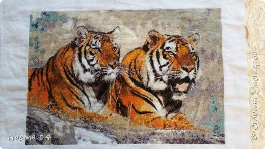 Полгода вышивала я тигров. Пока это самая большая картина, которую я вышила (35х52). Решила немного показать процесс да и для себя оставить память. Вышивала в подарок дядюшке. Итак, начнём историю! фото 1
