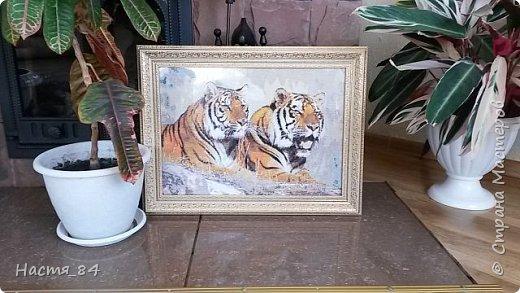 Полгода вышивала я тигров. Пока это самая большая картина, которую я вышила (35х52). Решила немного показать процесс да и для себя оставить память. Вышивала в подарок дядюшке. Итак, начнём историю! фото 14