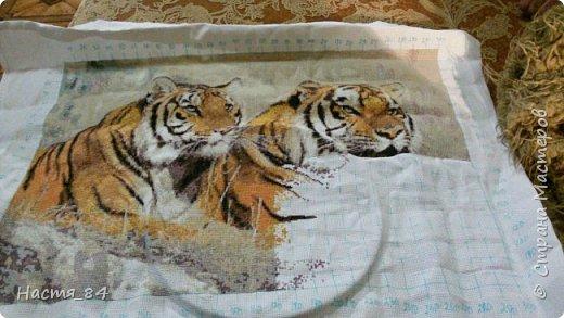 Полгода вышивала я тигров. Пока это самая большая картина, которую я вышила (35х52). Решила немного показать процесс да и для себя оставить память. Вышивала в подарок дядюшке. Итак, начнём историю! фото 7
