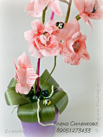 Ну вот как и обещала еще один сорт орхидеи зацвел..... фото 2