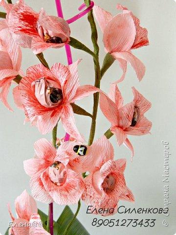 Ну вот как и обещала еще один сорт орхидеи зацвел..... фото 3