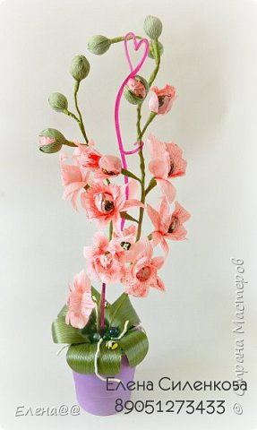 Ну вот как и обещала еще один сорт орхидеи зацвел..... фото 4