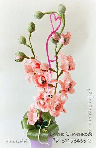 Ну вот как и обещала еще один сорт орхидеи зацвел..... фото 5