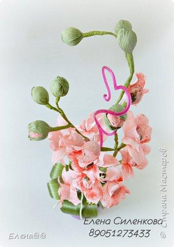 Ну вот как и обещала еще один сорт орхидеи зацвел..... фото 6