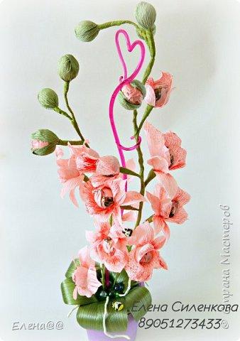 Ну вот как и обещала еще один сорт орхидеи зацвел..... фото 1