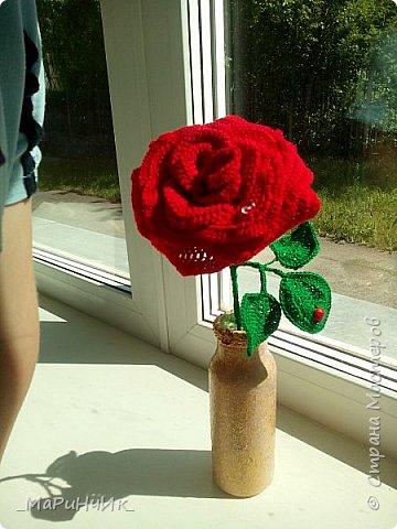 Красная РОЗА. фото 3