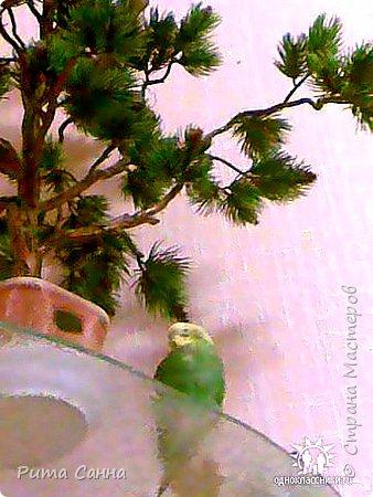 ПЕРСИК - корень , листики из ткани и персики с пенопласта ( из магазина ) фото 5