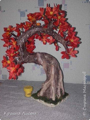деревце не большое, максимум 35 см в высоту фото 2