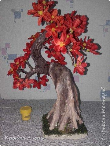 деревце не большое, максимум 35 см в высоту фото 3