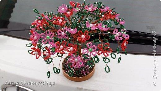 цветущее  дерево  фото 3