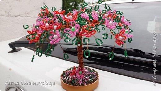 цветущее  дерево  фото 7