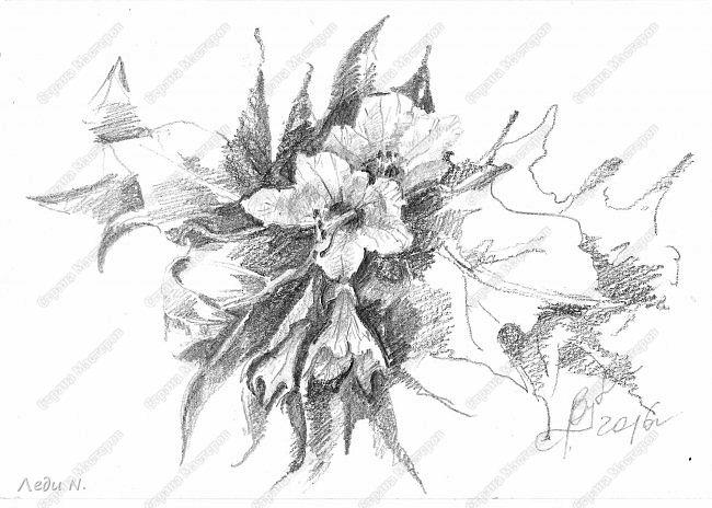 """Доброе время суток, уважаемые обитатели СМ!  Думаю, никто не станет возражать, что весна - пора цветения и любви? Вот об этом и поговорим сегодня:)  Сначала показываю свой триптих """"Цветы поздней весны""""  Цветы. которые мы часто видим поздней весной. Некоторые и летом, но часто жар выжигает их, а вот сейчас они цветут, не ведая, что их ждёт. Не розы. Не ирисы. Вообще не садовый, культурные цветы. Но разве они менее прекрасны?  Сурепка. Если ли цветок непритязательней и незаметней? Порой он пробивается и сквозь асфальт. Удивительного мужества цветок!     фото 2"""