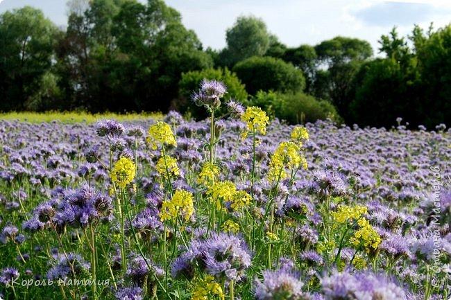 Добрый день! Лето радует нас буйством красок, пьянящими запахами, теплом и, надеюсь, хорошими впечатлениями... фото 14