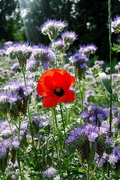 Добрый день! Лето радует нас буйством красок, пьянящими запахами, теплом и, надеюсь, хорошими впечатлениями... фото 15