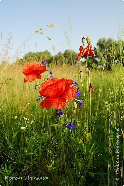 Добрый день! Лето радует нас буйством красок, пьянящими запахами, теплом и, надеюсь, хорошими впечатлениями... фото 1