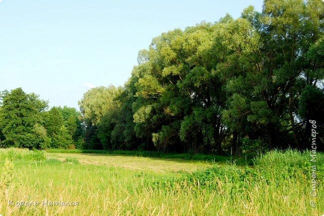 Добрый день! Лето радует нас буйством красок, пьянящими запахами, теплом и, надеюсь, хорошими впечатлениями... фото 17