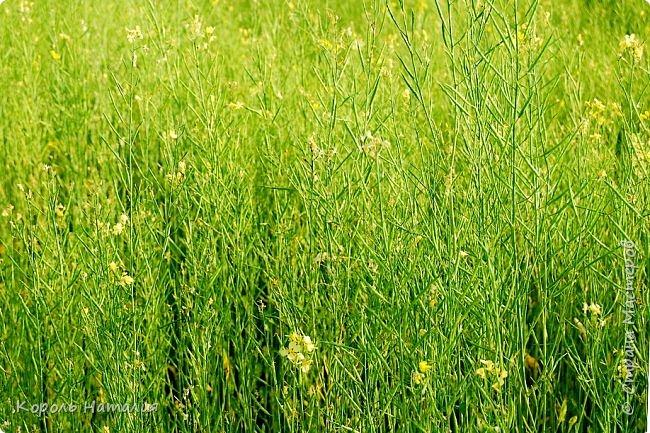 Добрый день! Лето радует нас буйством красок, пьянящими запахами, теплом и, надеюсь, хорошими впечатлениями... фото 21