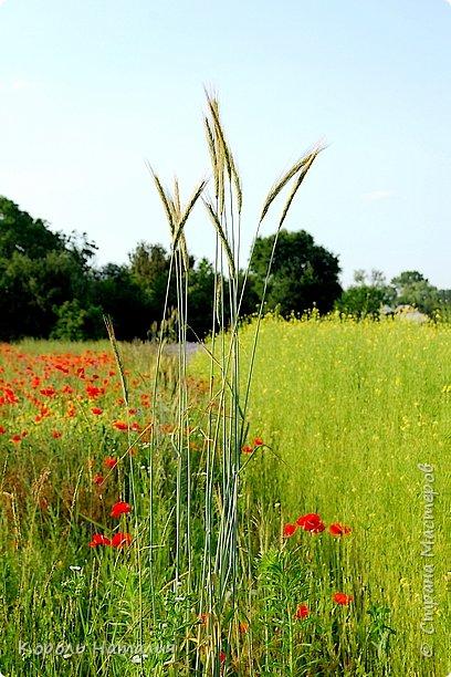 Добрый день! Лето радует нас буйством красок, пьянящими запахами, теплом и, надеюсь, хорошими впечатлениями... фото 24