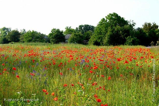 Добрый день! Лето радует нас буйством красок, пьянящими запахами, теплом и, надеюсь, хорошими впечатлениями... фото 25