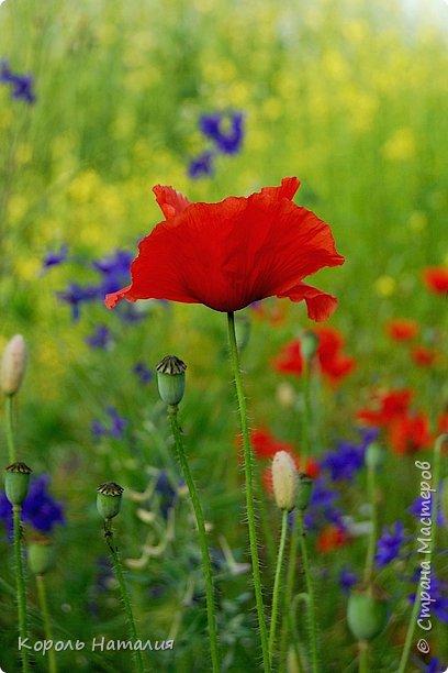 Добрый день! Лето радует нас буйством красок, пьянящими запахами, теплом и, надеюсь, хорошими впечатлениями... фото 26