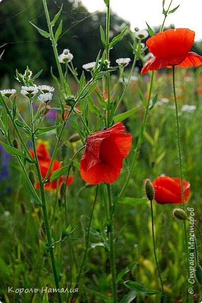 Добрый день! Лето радует нас буйством красок, пьянящими запахами, теплом и, надеюсь, хорошими впечатлениями... фото 27