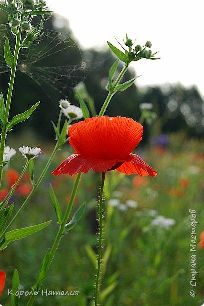 Добрый день! Лето радует нас буйством красок, пьянящими запахами, теплом и, надеюсь, хорошими впечатлениями... фото 28