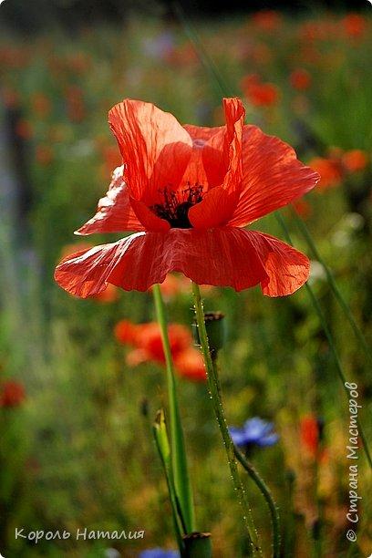 Добрый день! Лето радует нас буйством красок, пьянящими запахами, теплом и, надеюсь, хорошими впечатлениями... фото 29